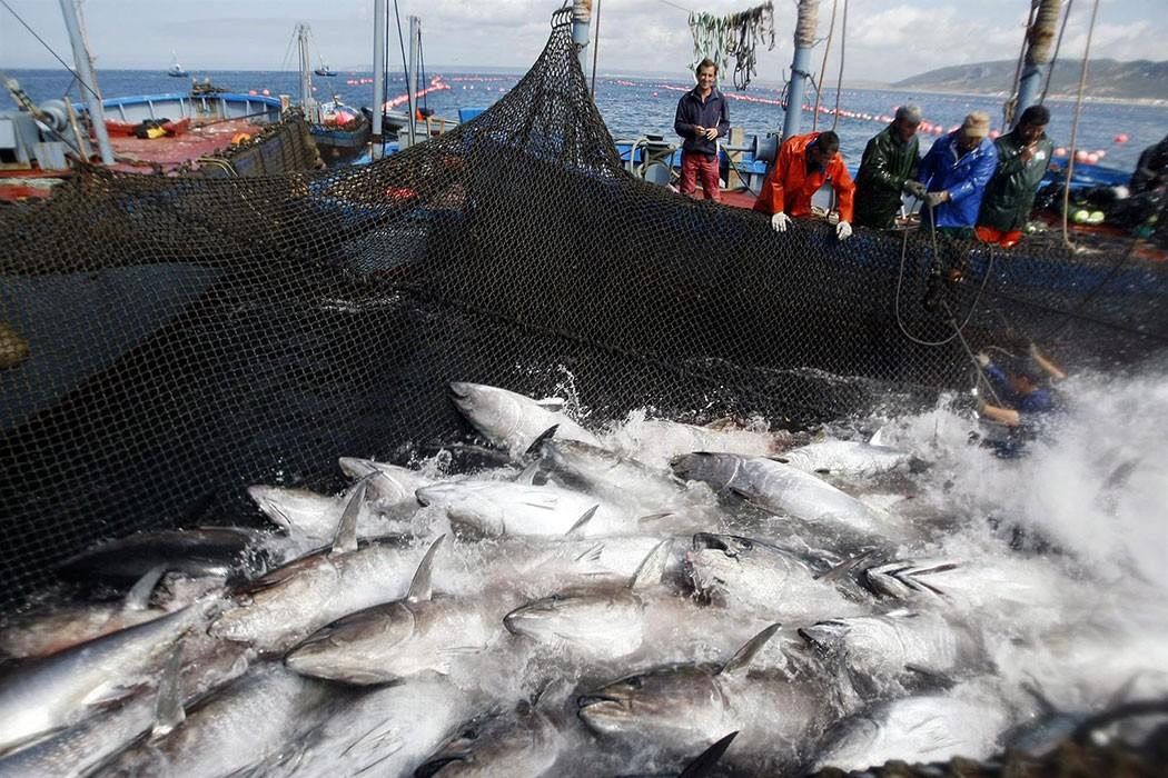 The Tuna Almadrabas: 30 centuries of sustainability | holafoodie.com