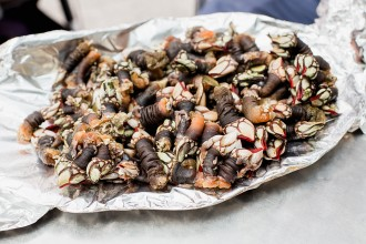 Percebes Galician Goose Barnacles